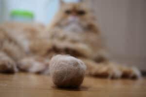 كرات الشعر عند القطط: أسباب تشكلها وطرق علاجها