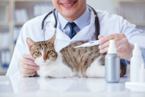 أعراض وأسباب ارتفاع درجة حرارة القطط وكيفية علاجها